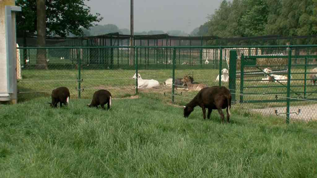 Refuges d'animaux en grève: Di Antonio intervient