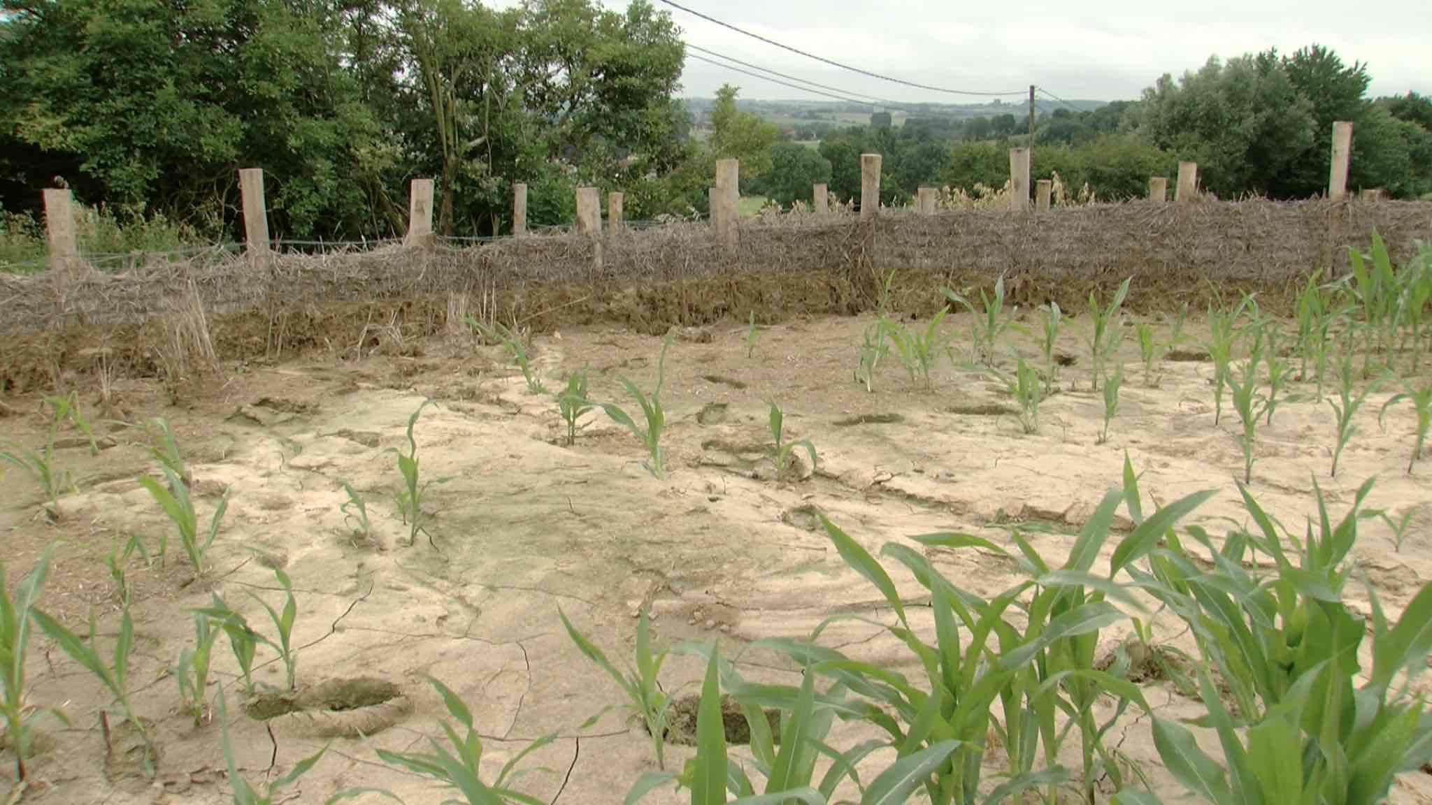 Les fascines, une bonne solution contre les coulées de boue