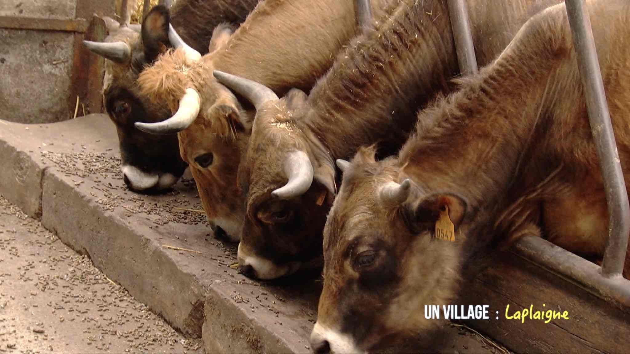 Lapins, canards, porcs, vaches, ...