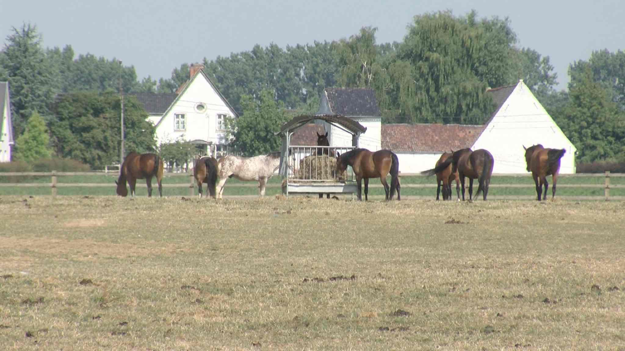 Sécheresse: au Manège du Quenoy, des précautions sont prises pour la santé des chevaux