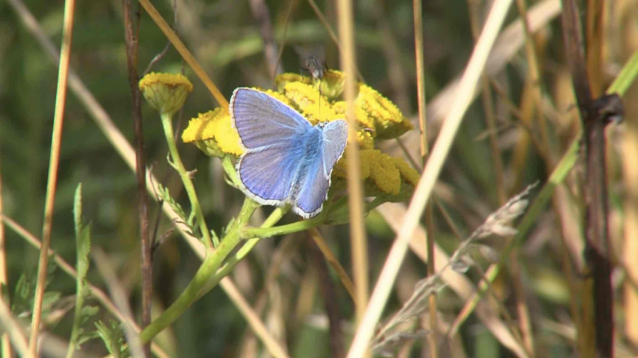 Ça papillonne dans nos jardins